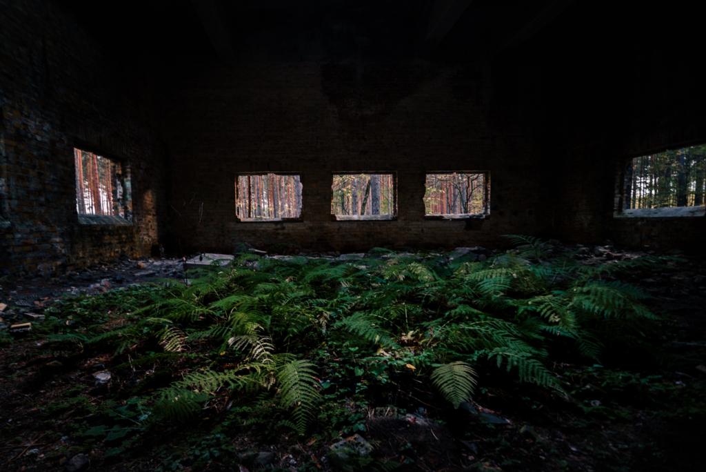 opuszczona fabryka w lesie