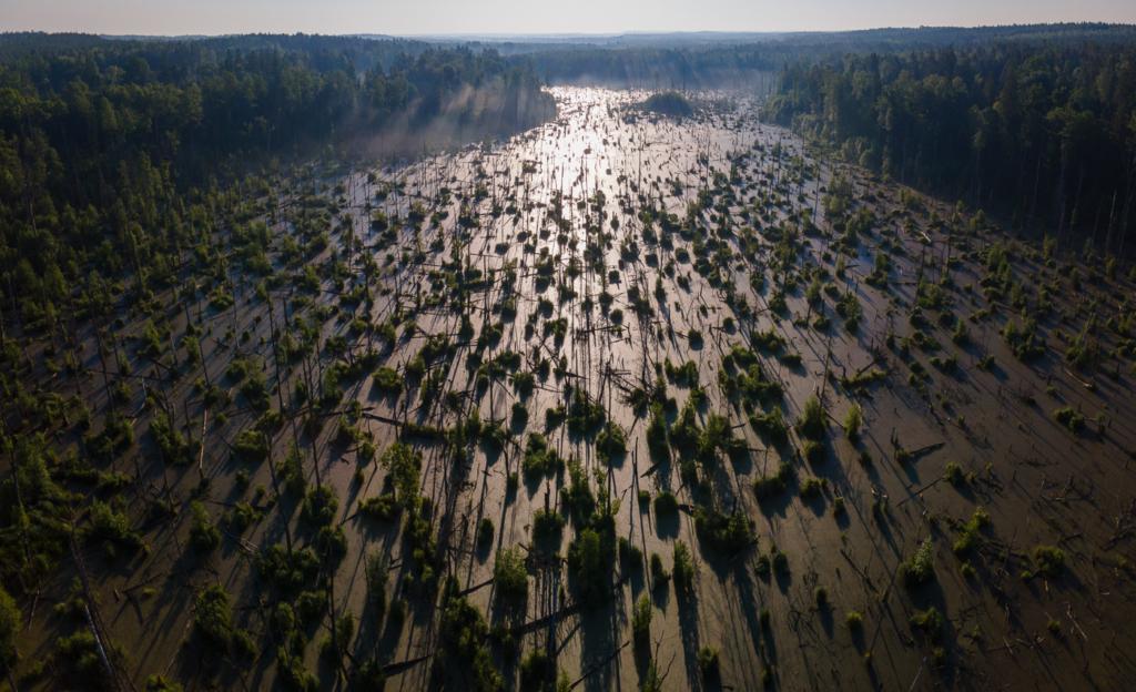 Puszcza Knyszynska - Bagno
