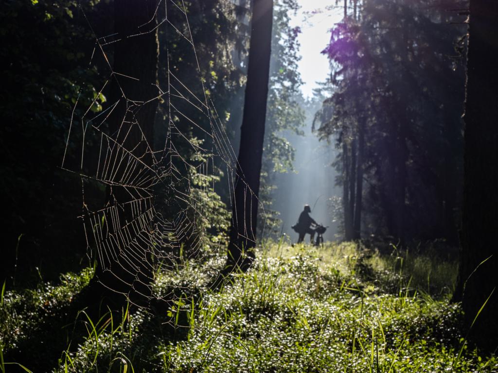pajęczyna poranek rower