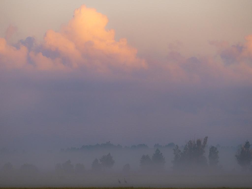 Zurawie we mgle