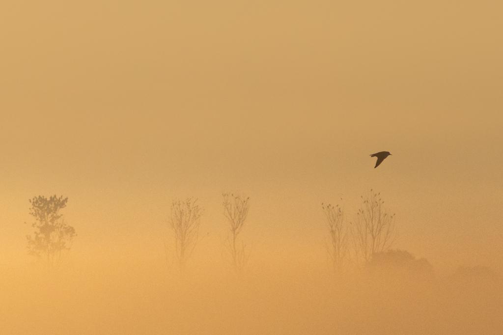 ptaki nad biebrza