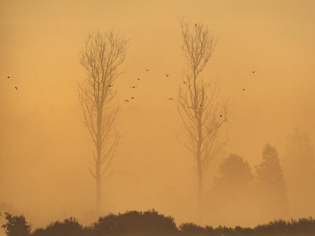 Ptaki nad narwią